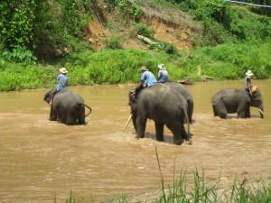 thailand, elephants, chiang mai