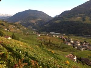 bolzano, wine